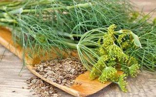 Эффективное лечение цистита семенами укропа