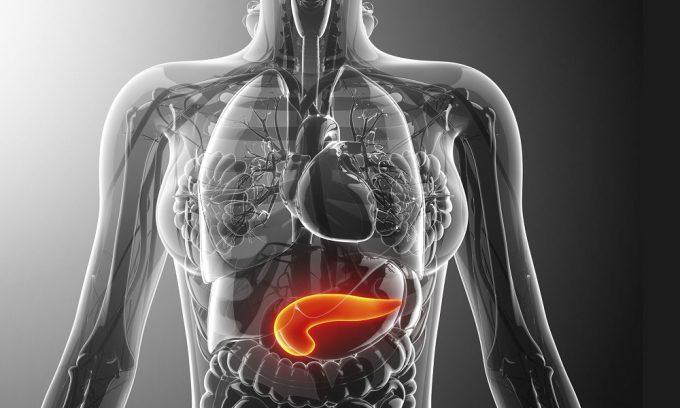 Клюква улучшает работу поджелудочной железы