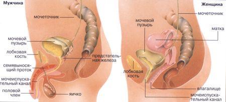Как вылечить боли в ногах и пояснице