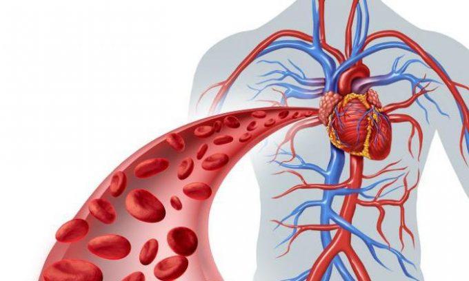 Нарушение кровообращения в сосудах при цистите может появиться в результате долгого неопорожнения мочевого пузыря