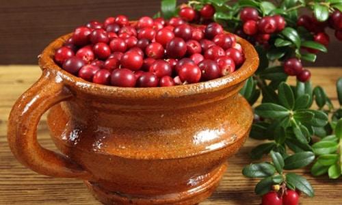 Использовать толокнянку при цистите начали северные племена, жившие на территории нынешней Прибалтики, с тех времен это растение пользуется популярностью у огромного числа травников