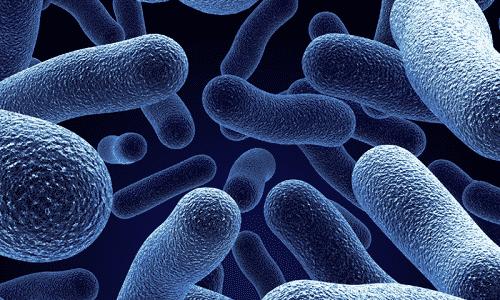 Инфекции, вызванные различными микроорганизмами, характеризуются развитием острого воспалительного процесса
