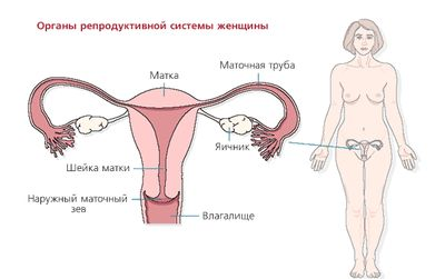Симптоми мочевого пузиря у женщин